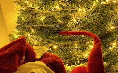 Fijne kerstdagen en een liefdevol en begripvol 2021